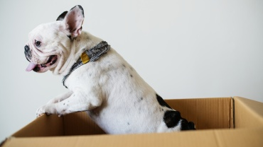 Pet Care during a Move